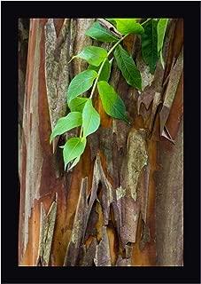 South Carolina, Charleston Crape Myrtle bark by Don Paulson 17