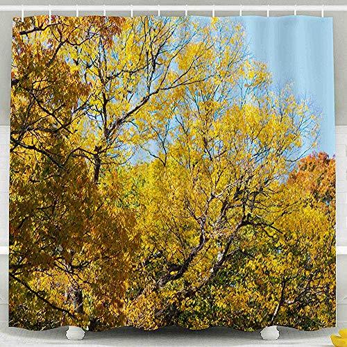 Tenda per doccia, foglie di acero di fogliame di colore di foglia d'autunno in Temple Mountain Busan Corea del Sud Beomeosa Geumjeongsan Set da bagno impermeabile, 183X183Cm