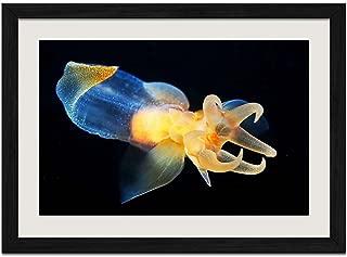 Beautiful Marine Life - Art Print Wall Black Wood Grain Framed Picture(16x12inch)