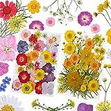 YMHPRIDE 82 piezas DIY conjunto de flores secas, margaritas secas naturales reales, velas, joyería de resina, colgante de uñas, manualidades para hacer decoraciones florales artísticas