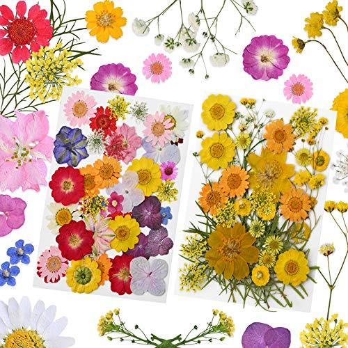 YMHPRIDE 82 Pz Set di Fiori secchi Fai da Te, Veri Fiori secchi Naturali della Margherita Candela Gioielli in Resina Ciondolo per Unghie Artigianato Che Fanno Arte Decorazioni Floreali
