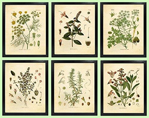 Ink Inc. Set of 6 Herb Botanical Prints, Unframed, 5x7 inch Matte, Thyme, Mint, Rosemary, Parsley, Sage, Fennel