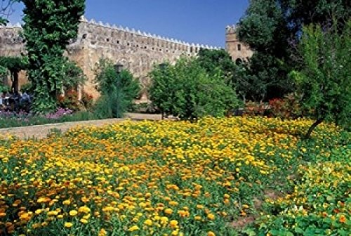 The Poster Corp John & Lisa Merrill/DanitaDelimont – Gardens and Crenellated Walls of Kasbah des Oudaias Morocco Photo Print (60,96 x 38,10 cm)