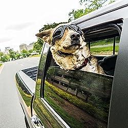 Hund Sonnencreme - ist es notwendig und welche ist am besten?
