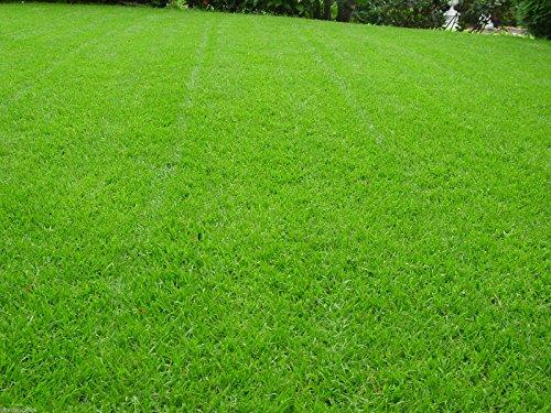 10 kg Sportrasen Spielrasen Grassamen Rasensamen Rasensaat Gras strapazierfähig