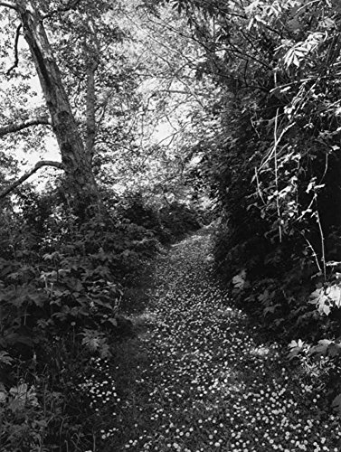 Robert Adams. An Old Forest Road: Ausst.Kat. Galerie Thomas Zander, Köln 2017