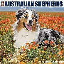 Just Australian Shepherds 2019 Wall Calendar (Dog Breed Calendar)