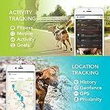 Haustier GPS Tracker für Hunde und Katzen von Kippy - 2