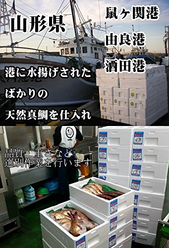 お食い初め鯛はまぐりセット300g山形県産天然真鯛冷蔵敷紙飾り