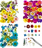 120 Pcs Dried Flowers for Resin with Tweezers Multiple Colorful Real Pressed Dry Flower Leaves Mixed, for DIY Crafts Nail Art Candle Soap Making Phone Case Jewelry Pendant Floral Decors