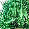 香りが良い 万能細ねぎの苗 2個セット (ねぎ多粒蒔き苗/品種:若香)【野菜苗 10.5cm半硬質ポット実生苗/2個セット】ポット苗なので年中植付け可能!フレッシュな万能ねぎで、生育が早い品種です。香りが良く料理や薬味などに広く利用出来ます。プランターでも簡単に栽培出来、家庭菜園向きです。茎元からハサミで切って収穫し根株を残せば、何回も繰り返し収穫可能です。新鮮野菜苗自社農場より直送!!【※出荷タイミングにより、苗の大きさは大きくなったり小さくなったりします。植物ですので多少の枯れ込みやキズ等がある場合もございますが、あらかじめ、ご了承下さい】