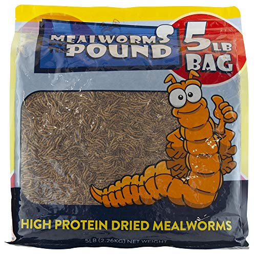 10 best mealworms chubby for 2020