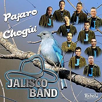Pajaro Chogüi