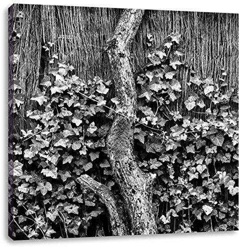 Klimop op een oude hekCanvas Foto Plein | Maat: 60x60 cm | Wanddecoraties | Kunstdruk | Volledig gemonteerd