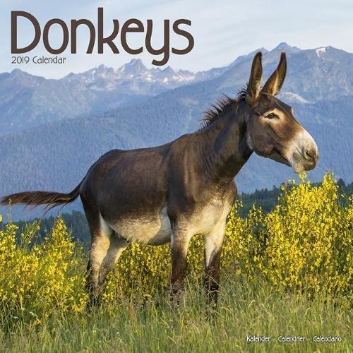 Donkeys Calendar 2019