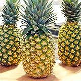 Varietà: frutta Clima: temperato Stagione: primavera, estate, autunno Quantità: 100 pezzi / borsa Cerca nel nostro negozio più semi di diversi tipi. Bienveniad!