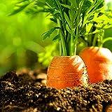 zhouba - semi di carota per piante da giardinaggio, 100 pezzi di semi di carota, verdure sane, balcone e giardino