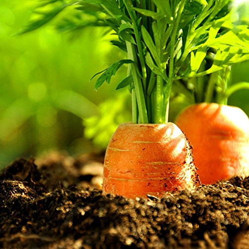 Garden Flower Plant Seeds 100Pcs Carrot Seeds Healthy Vegetable Balcony Potted Plant Home Garden Decor