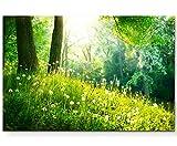 Eau Zone Wandbild auf Leinwand 120x80cm Pusteblumen im Wald