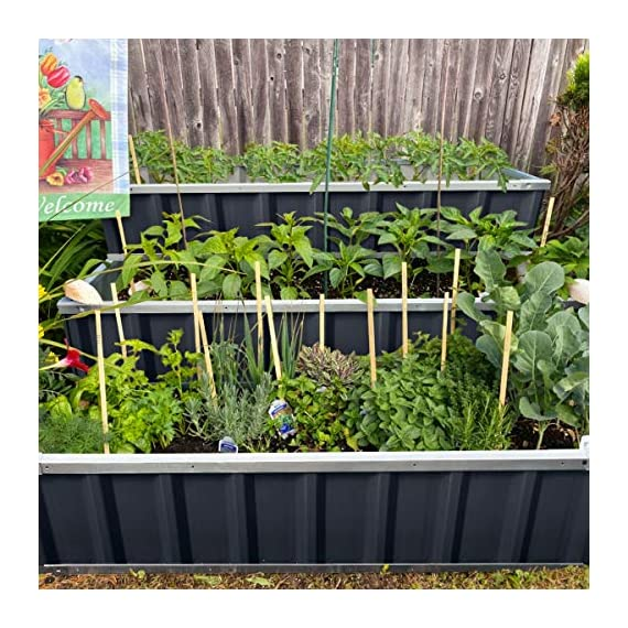 KING BIRD 3 Tiers Raised Garden Bed Dismountable Frame Galvanized Steel Metal Patio Garden Elevated Planter Box 46''x46… 8 【Use it as 3 Individual Raised Bed】--- Each tier is connected by the fastener connectors, and you can take the connectors down to make the whole raised bed to 3 individual raised garden bed and get more cultivated area. Or used as 3 tiers raised bed to plant 3 different needs plants. Capacity 21 Cu Ft of Soil 【THREE YEARS WARRANTY】--- The most wonderful design of our KING BIRD raised garden bed is not only about the convenient and fast installation without tools, also for its smart design to vastly increase the loading ability and capacity. THREE YEARS WARRANTY for the whole raised bed. 【Multilayer Galvanized Paint】--- Upgraded multilayer galvanized paint efficiently prevents rust and continues to beauty; also never worry about that the rain damage the wood garden bed; galvanized steel garden bed provides a lasting use and no discoloration. No painting inside, no worries about the damage for plants.