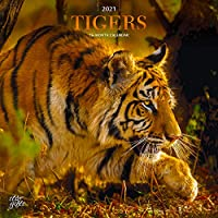 Tigers 2021 12 x 12インチ 月間正方形壁掛けカレンダー ホイルスタンプカバー付き StarGifts、野生動物園動物園動物園動物