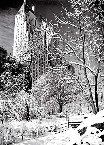 Central Park in Snow, New York Christmas Cards Boxed Set of 12 Holiday Cards And 12 Envelopes. Made in USA