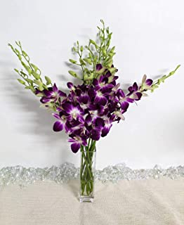 Athena's Garden Fresh Vibrant Purple Dendrobium Sonia/Galaxy/Bombay Cut Orchids Bunch with Vase Glass