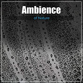 2017 Ambience of Nature. Best Meditation Sounds of Nature Suitable for Looping. Zen Collection