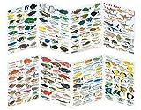 Fischfaltblatt Fischbestimmungskarte Faltblatt zur Fischbestimmung Mittelmeer, Süßwasser, Rotes...