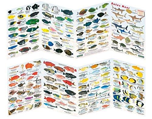 Fischfaltblatt Fischbestimmungskarte Faltblatt zur Fischbestimmung Mittelmeer, Süßwasser, Rotes Meer (Rotes Meer)