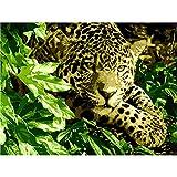 nobrand Cuadros para Pintar por Numeros Leopard DIY adulto digital pintura al óleo lienzo set regalo de vacaciones creación de arte hecho a mano-Con Marco 40X50Cm