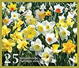 Mixed Daffodils (25 Bulbs) - Assorted Colors Daffodil Narcissus Bulbs by Willard & May...