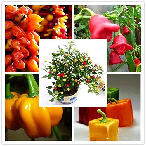 100 graines géantes épices épicé piment rouge Chili Graines Plantes cour jardin de bonsaïs en pot balcon graines de plantes Nouvelle arrivée 9