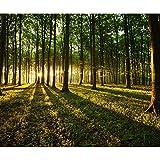 decomonkey Fototapete Wald 350x256 cm Tapete Wandbild Bild Fototapeten Tapeten Wandtapete Landschaft Baum Natur