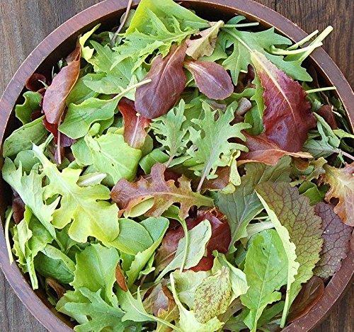 AGROBITS 600 + Gourmet Mesclun Mélange de graines de germes Bio Printemps/Automne
