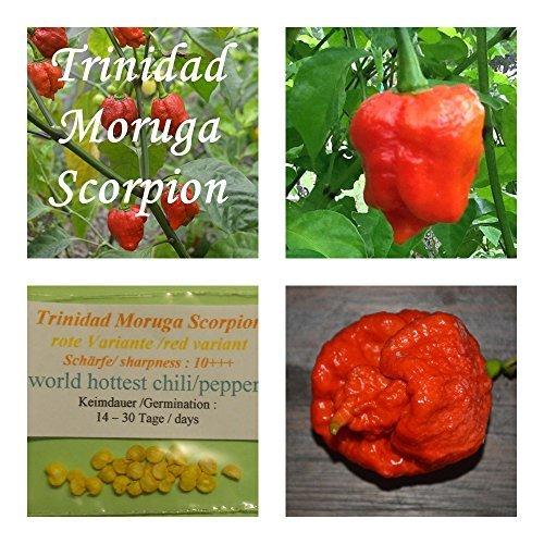 Trinidad Moruga escorpión rojo -20 semillas / variante rojo - uno de los de chile más picante del mundo!