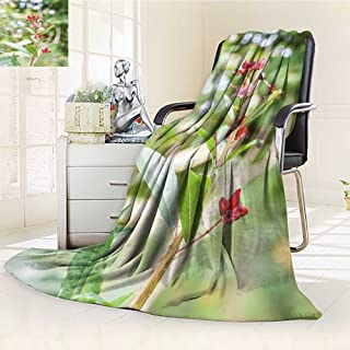 Decorative Throw Blanket Ultra-Plush Comfort labisia pumila or kacip fatimah is a herb that is native to malaysian rain fore Soft, Colorful, Oversized   Home, Couch, Outdoor, Travel Use(90