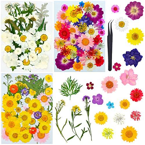 LABOTA 117 PCS Flores Prensadas Secas, Naturales Flores prensadas Reales para Resina DIY Joyas Nail Art Decoraciones Florales Colección Regalo Scrapbooking Arte Manualidades