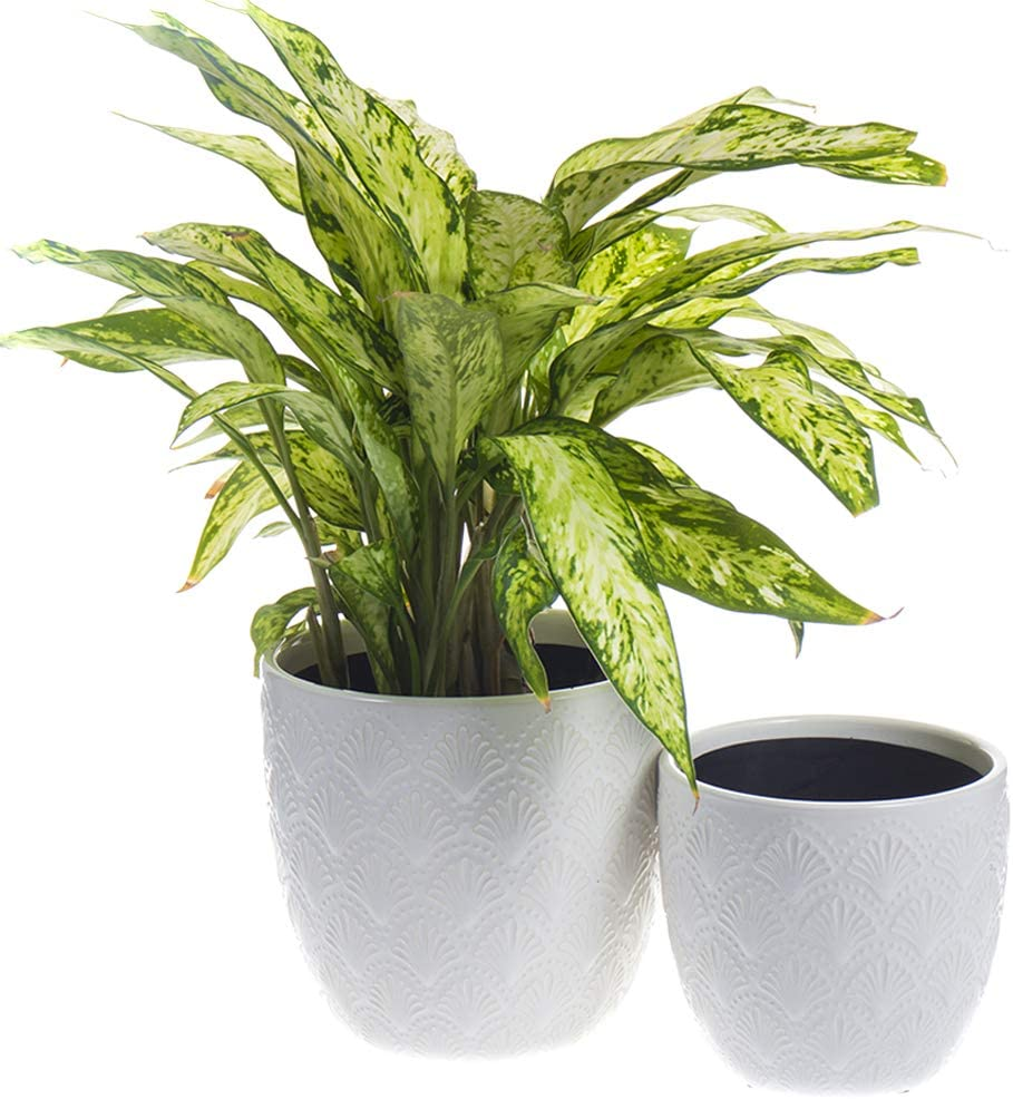 Nocuswao Ceramic Planters Garden Flower Pot 5.5 and 4.5 Inch Set of 2, Indoor and Outdoor, Modern Plant Containers(White,Shell Pattern Style)