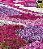 Zoom IMG-1 inkeme giardino flowers of the