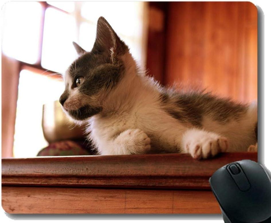 Max 69% OFF YENDOSTEEN Mouse Pads Customized Popular overseas Kitten Cats Pets Pet Felin Cat
