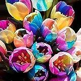 Zhouba Lot de 5 bulbes de tulipe arc-en-ciel pour plantes de jardinage Graines.