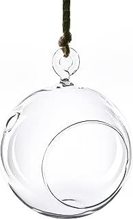 CYS Plant Terrarium Glass Height 4.25 inches. Glass Plant Terrarium Orbs (Pack of 6 pcs)