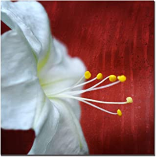 Trademark Fine Art Flower for Zoe by Philippe Sainte-Laudy Canvas Wall Art, 18x18-Inch