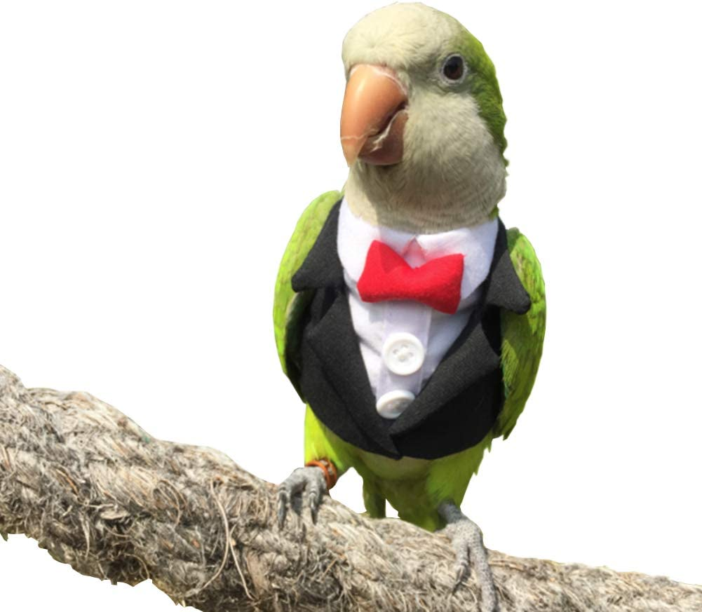 Pet Small Animals Clothes Birds Parrots Suit African Flight low-pricing Spring new work for
