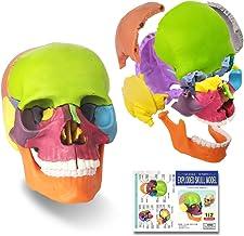 Generies 15 Parts Palm-Sized Anatomy Skull Model، Mini Human Color Skull Model کلینیک دندانپزشکی تجهیزات آموزشی قابل جدا شدن ، یادگیری آموزش پزشکی ، آموزش یادگیری کودکان ، پازل جمجمه
