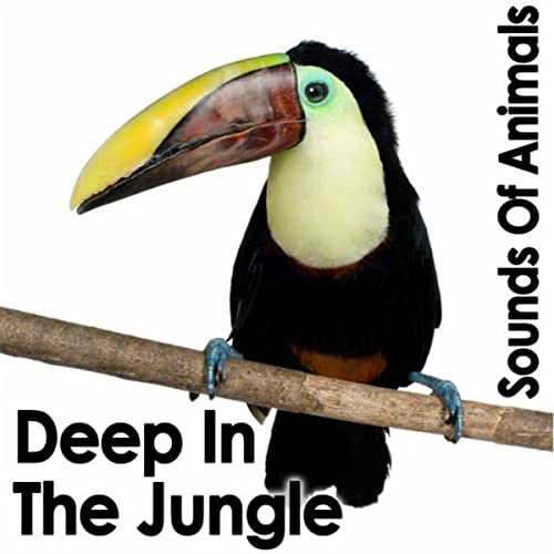 Loud Jungle Night by Dr  Sound Effects on Amazon Music - Amazon com