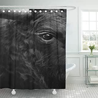 Emvency Fabric Shower Curtain Curtains with Hooks Cow Fighting Bull Head Detail in Black and White Eye Fight Animal Sport Attack Cattle Spain 72