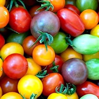 Rainbow Cherry Tomato Mix Seeds Colorful Heirloom Blend bin94 (50 Seeds)