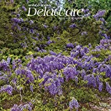 Delaware Wild & Scenic 2022 12 x 12 Inch Monthly Square Wall Calendar, USA United States of America Southeast State Nature